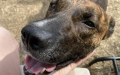 Dog of the Week- Wink