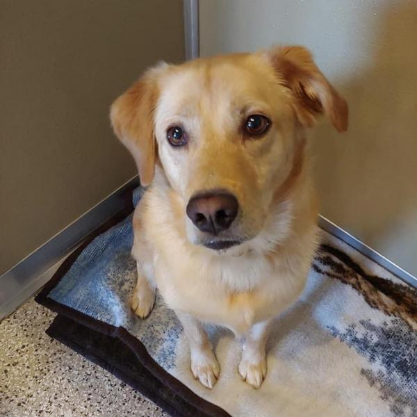 Dog of the Week- Max
